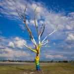 Joplin_Spirit_Tree_FEMA57408