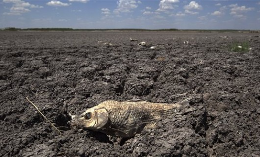 FILE - In this Aug. 3, 2011 file photo, the remains of a carp is seen on the lake dried out lake bed of O.C. Fisher Lake in San Angelo, Texas.  Global warming is rapidly turning America into a stormy and dangerous place, with rising seas and disasters upending lives from flood-stricken Florida to the wildfire-ravaged West, according to a new U.S. federal scientific report released Tuesday, May 6, 2014.  (AP Photo/Tony Gutierrez)